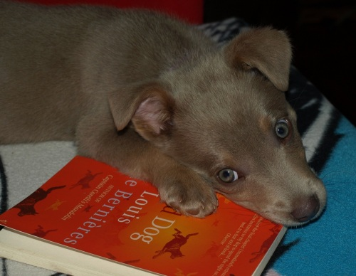 Cider the dog liked books from a young age