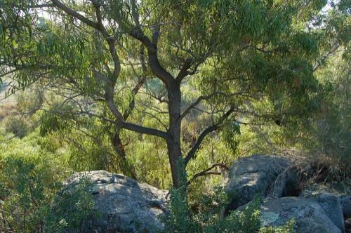 bushland along Merri Creek by Elizabeth Donoghue on Flickr